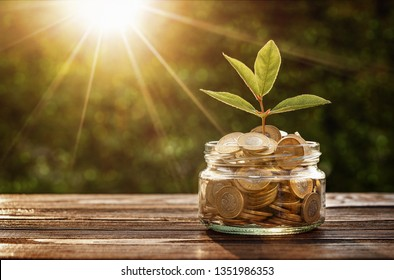 Small plant growing out from jar of coins with copy space