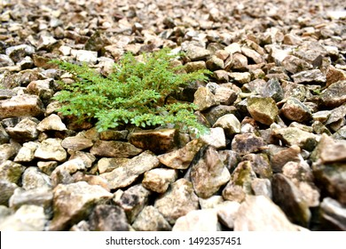 A small plant growing well on stony ground against all odds.