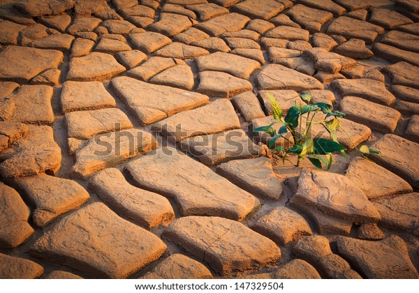 Small plant growth between cracked soil texture