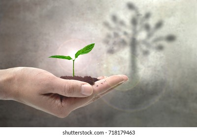 Small plant in hands with large tree shadow
