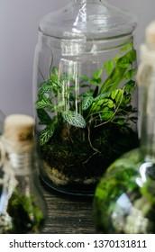 a small plant inside a glass decorative terrarium. florarium. fresh green interior decoration.