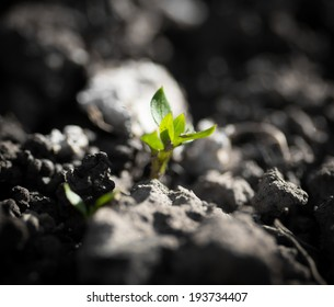 small plant in nature. macro