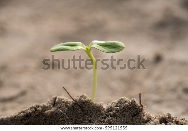 Small plant on pile of soil in the garden (sprout, plant, growth)