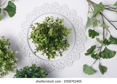 Small Plant on Tray with Foliage Flat Lay Top View