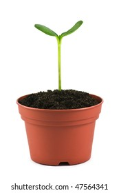 small plant in pot isolated on white