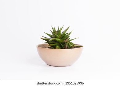 Small plant in pot succulents or cactus isolated on white background by front view - Shutterstock ID 1351025936