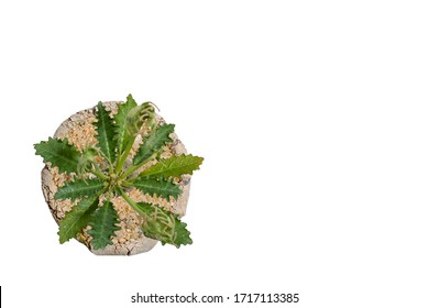 Small plant in pot succulents or cactus isolated on white background by top view