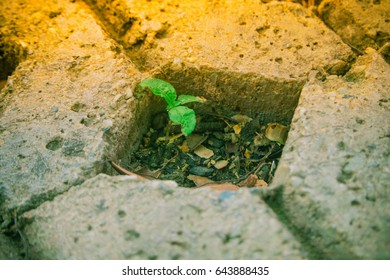 small plant starting grown in hole of brick