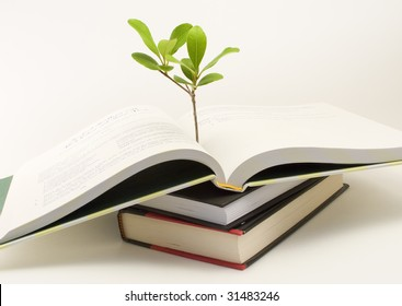 A small plant sticks up from an open book