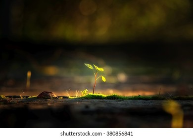 Small plant in the sunlight
