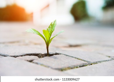 Small plant tree growing on cracked street