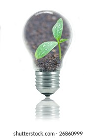 Small plant with water drops and relfection of sunshine in a light bulb isolated on white to represent eco friendly energy