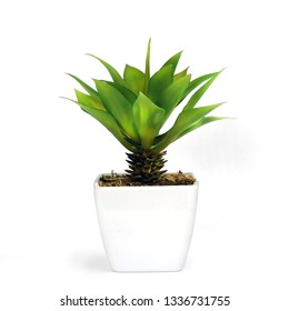 Small plant in a white pot, isolated white background.This has clipping path