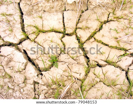 Small plants in a dehydrated soil. Life concept.