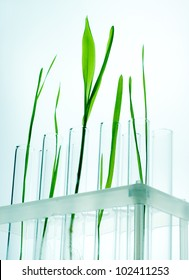 Small plants germinate in test tube, Genetically Modified Organisms
