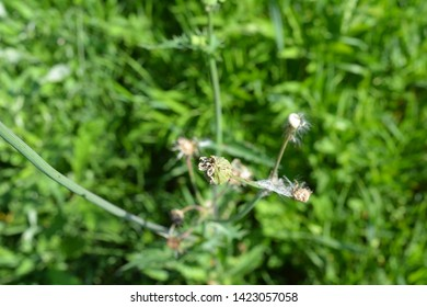 small plants in the grass