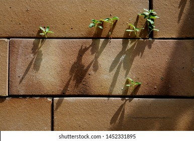 Small plants are growing in between bricks.  Because of Natural light,  shadow of the sprouts are shining on the wall material.  The photo presents breakthrough concept, ecology and environment.