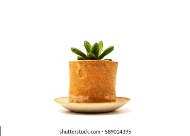 Small plants pot on white background.(selective focus)