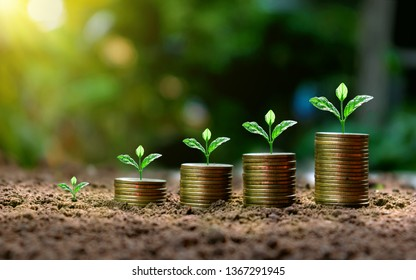 Small plants that are on stacked coins and ideas for saving money and increasing business profits