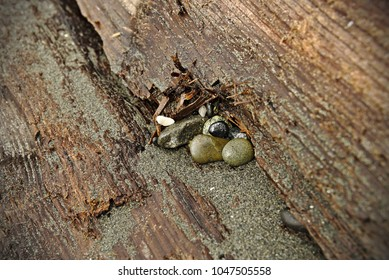 Small polished stones on a sandy tree bark