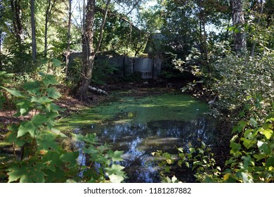 Small pond in the forest