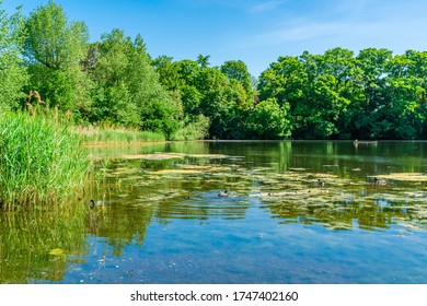 A small pond in Hampstead Heath park in north-west London. UK