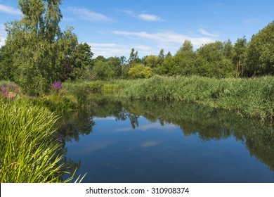 A small pond in London Wetlands Center - WWT nature reserve