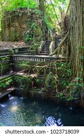 Small pond in Monkey Forest Sanctuary in Ubud, Bali, Indonesia