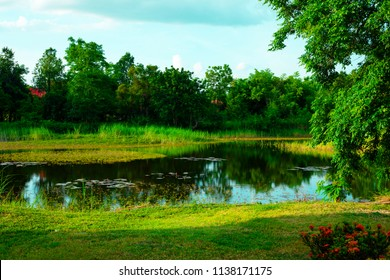 small pond in nature , Water Pond Scene - Pond of water with a sunny reflection of trees in a wooded rural area