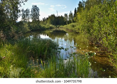 A small pond. Summer water landscape with grass and bushes.