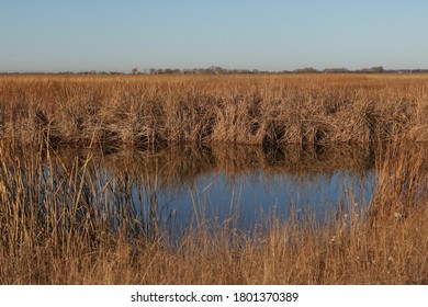 Small pond of water in the midst of a field of dry grass