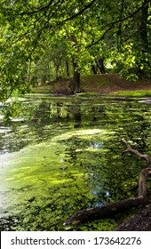 Small pond in the woods covered in duckweed