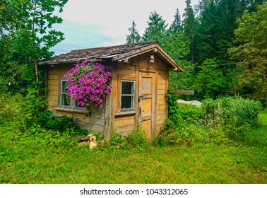 Small poor romantic wooden cottage with flowers in the summer, green grass and forest