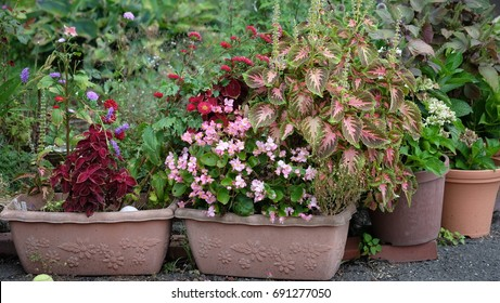 Small pots of flowers in the garden