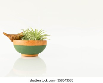 The small potted plants