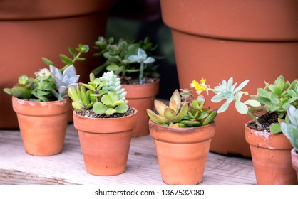 small potted plants of suculants and cactus