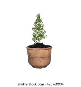 The Small potted trees, isolate, white background;