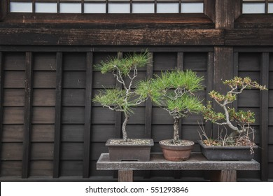 Small potted trees sit on a bench inside a temple in Kobe, Japan.