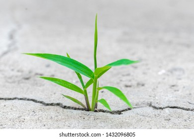 a small but powerful spout plant makes his way and breaks the cement pavement