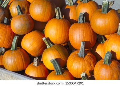 small pumpkin halloween thanksgiving country organic agriculture