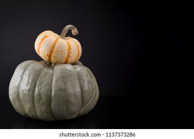 Small Pumpkin Sits on Large Heirloom Pumpkin with copy space