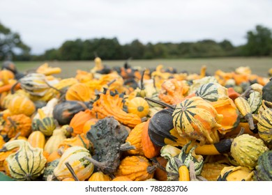 a lot of small pumpkins and gourds