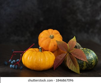 Small pumpkins and wild grapes. Autumn still life on a dark background. Two pumpkins are yellow, one is green.