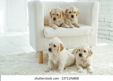 Small puppies dogs