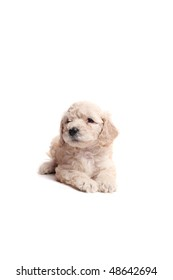 small puppies over a white background