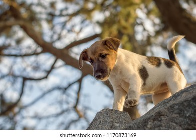 A small puppy, a breed of fox terrier, wants to jump off a fence
