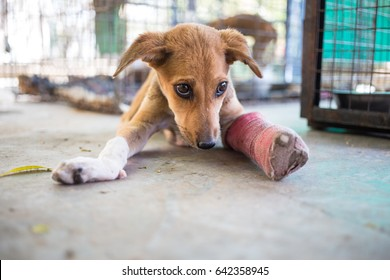 Small puppy with a broken leg resting at a animal shelter in India.
