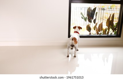 Small puppy looking outside waiting for owner coming home.