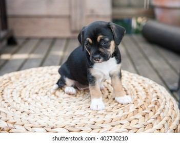 Small Puppy Playing on Woven Ottoman Outside on Wooden Deck