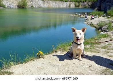 small puppy sitting near lake beauty little dog